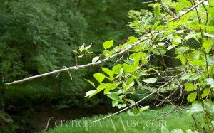 Vine-Wrapped Branch