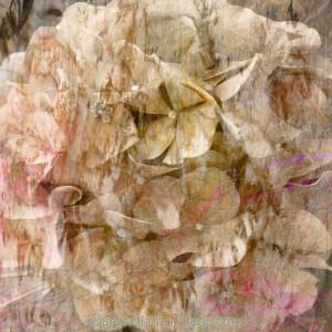 Day 90: Vintage Hydrangea Background